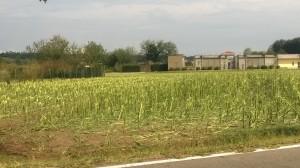 Marano ticino danni agricoltura