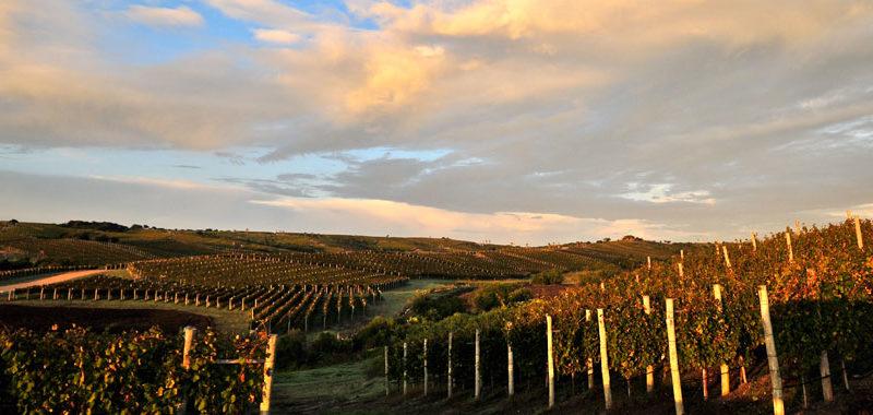 La Bodega Garzón più sostenibile con Climaveneta