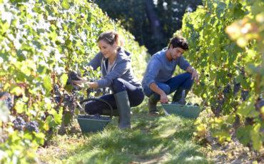 Gli agricoltori italiani rischiano di perdere i finanziamenti europei della Pac