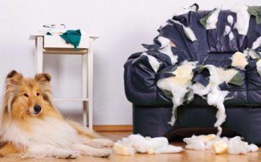Come proteggersi dai danni causati dal cane, dalla lavatrice. E anche l'iPad