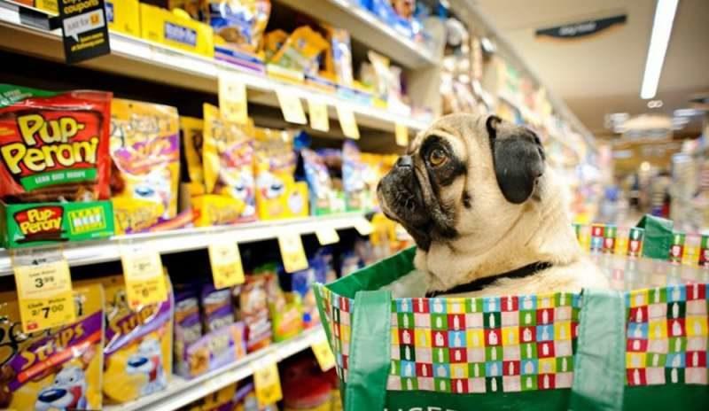 Picco di vendite negozi di animali e cura della persona