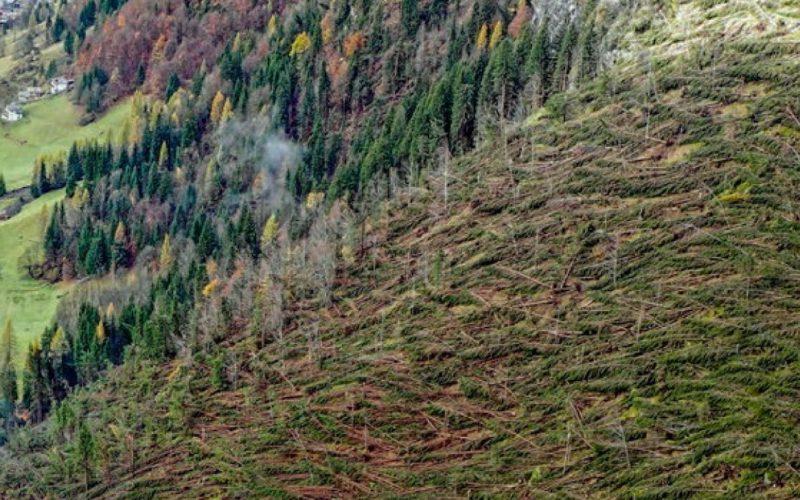 Piantare ancora alberi? Meglio gestire le foreste