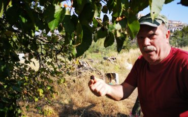 Aiutiamo Giovanni D'Errico a creare Puglia-Farm