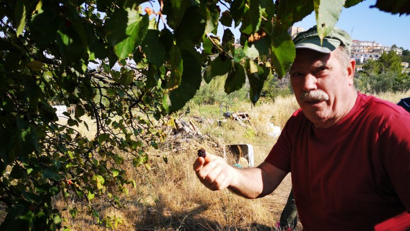 Puglia-Farm