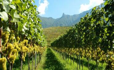 83 milioni per lo sviluppo rurale della Calabria