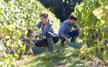 Disoccupazione: gli under 35 si danno all'agricoltura