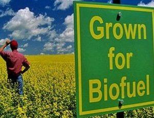 Sostenibilità dei biocarburanti: certificazione non affidabile