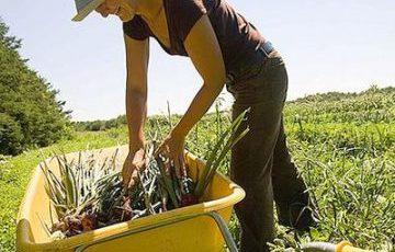 Green Jobs: un milione di nuovi posti di lavoro in 5 anni