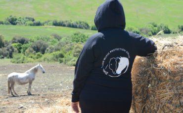 Intesa Sanpaolo sostiene Horse Protection